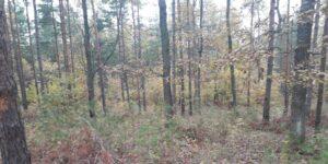 Спряха сечта в обекти за добив на дървесина в две землища в Странджа