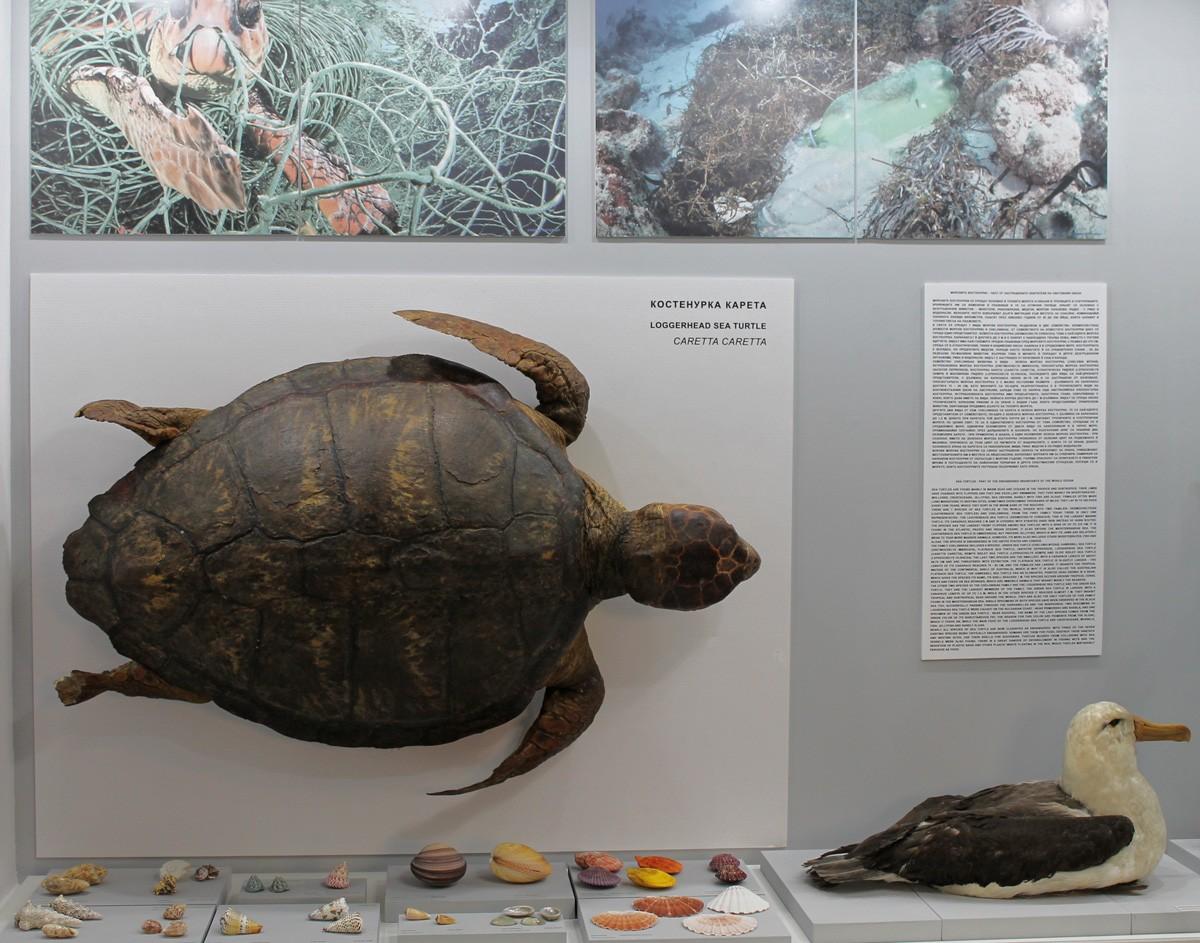 Нова постоянна експозиция в Природонаучния музей